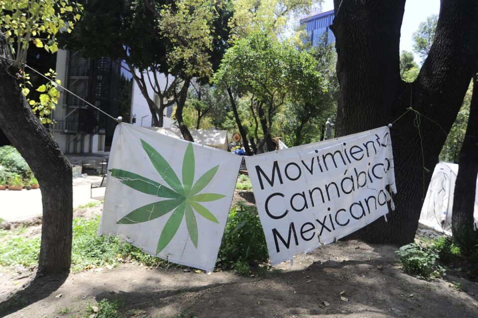 At Last, Mexico Publishes Medical Cannabis Regulations