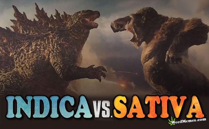 Indica vs Sativa Gozilla vs Kong